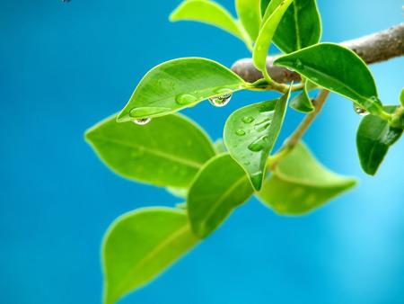 برگ سبز درخت و آسمان آبی barg sabz aseman abi