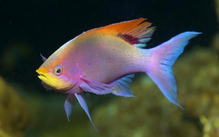 عکس ماهی زینتی آکواریوم aks mahi akvariom
