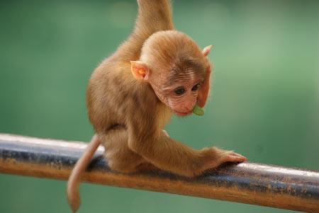 عکس بچه میمون شیطون بانمک monkey funny little