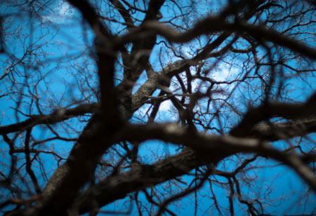 عکس ماه از میان شاخه های درخت moon seen trough tree