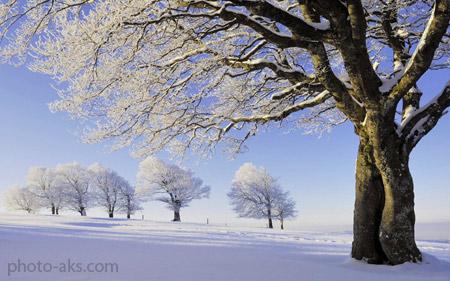 منظره برف زمستانی روی درخت nature tree winter snow