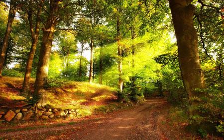 منظره جنگل تابستانی nature summer jungle