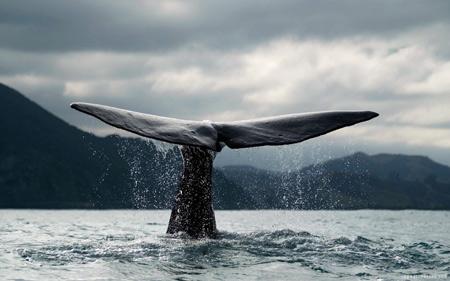 عکس دم نهنگ بیرون آب ocean whale tale