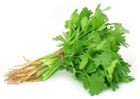 عکس سبزی جعفری organic coriander