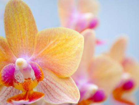 عکس بسیار زیبا از گل ارکیده aks goleh orkideh