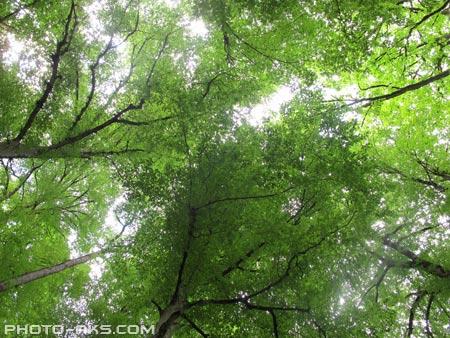 بر فراز درختان جنگلی over of trees