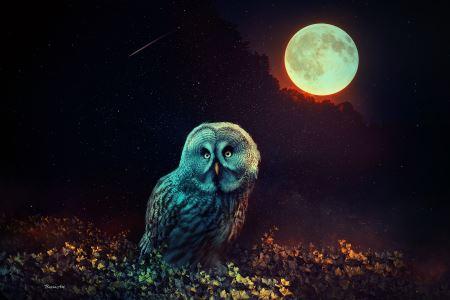 جغد زیر نور ماه کامل owl night