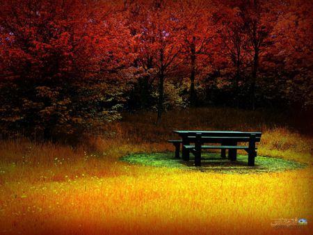 نیمکت خالی در پاییز bench in autumn