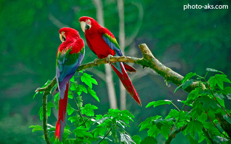 زیباترین طوطی های برزیلی parrots paradise