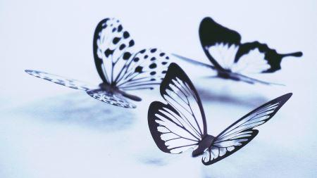 عکس پروانه های یخی aks parvane yakhi