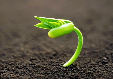 عکس رویش و جوانه زدن گیاه از خاک plants wallpaper