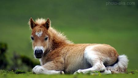 عکس کره اسب کوچک pony horse wallpaper