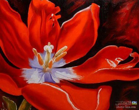 نقاشی زیبا از گل شقایق poppy painting