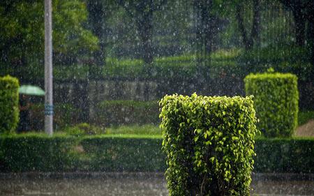 عکس بارش زیبای باران در طبیعت rain nature green