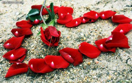 عکس عاشقانه قلب از گل رز red love flowers