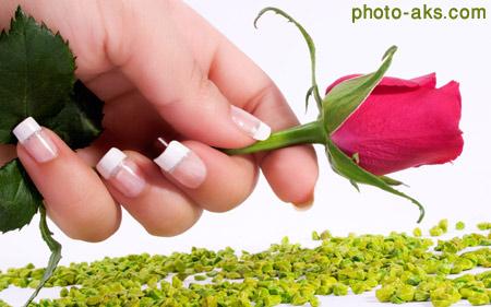 تقدیم شاخه گل رز rose hand nails flower