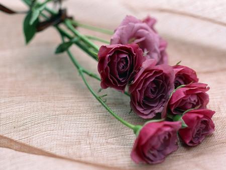 شاخه گل رز طبیعی ارغوانی rose flower beanch