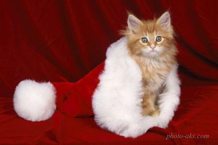 گربه بابا نوئل بامزه santa cut kitty