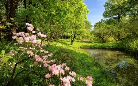 عکس سرسبز طبیعت بهاری 2017 green nature spring tree