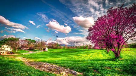 منظره طبیعت بهاری زیبا spring nature 2020