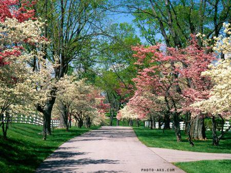 شکوفه های بهاری در پارک spring park