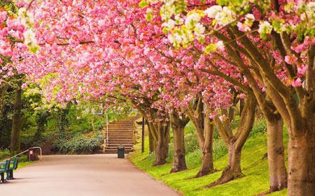 شکوفه درختان بهاری spring tree flowers
