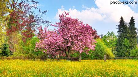 منظره بهاری زیبا spring desktop wallpaper