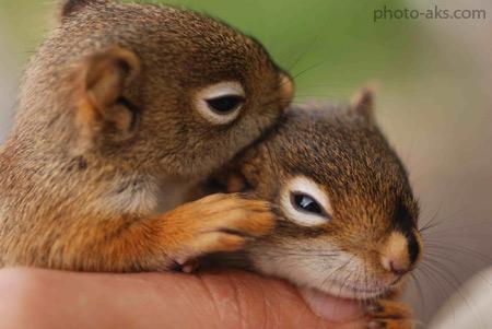 بچه سنجاب های بامزه squirrels baby cute