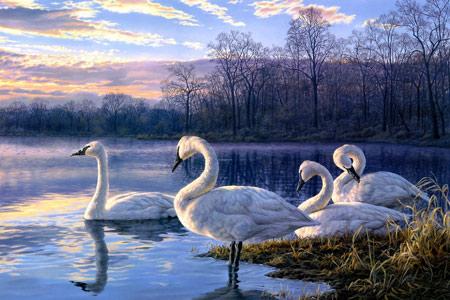 نقاشی بسیار زیبا پرندگان قو swan bird painting