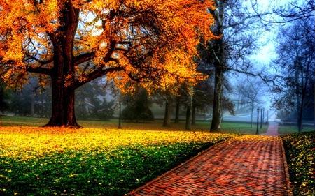 منظره بسیار زیبا درخت زرد پاییزی tabiat derakht zard paeizi