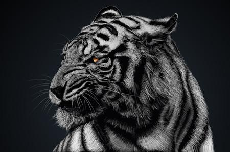 عکس ببر عصبانی و خشمگین angry tiger wallpaper