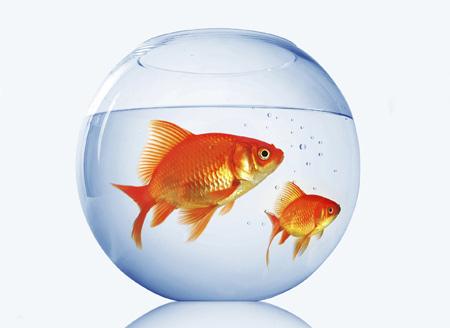 عکس تنگ ماهی قرمز گرد aks tong mahi germez