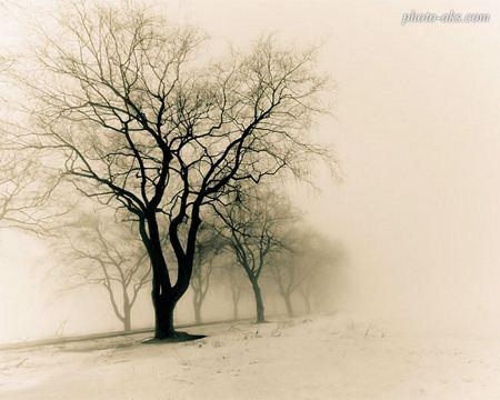 عکس درخت خشکیده tree(photo aks)
