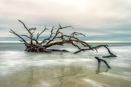 درخت خشکیده در ساحل دریا tree sea beach