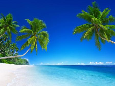 منظره زیبا سواحل آرام استوایی tropical beach paradise