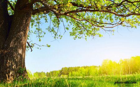 زیر درخت کهنسال under tree