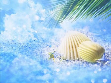 عکس گوش ماهی سواحل تابستانی summer seashell wallpaper