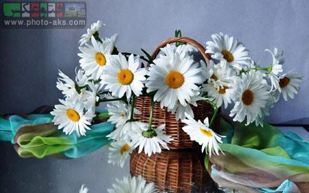گل ها سفید داخل سبد white flower in basket
