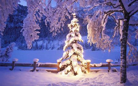 عکس درخت کریسمس نورانی winter light tree
