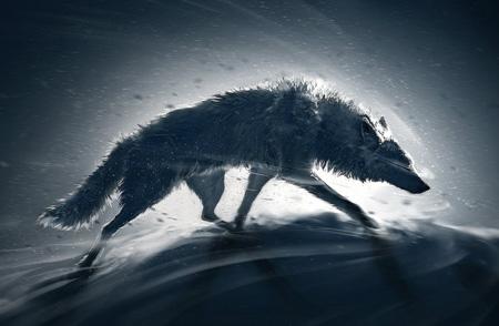 عکس گرگ در کولاک زمستانی wolf storm