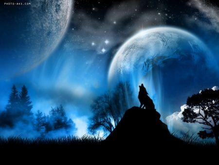والپیپر زیبا از گرگ wolf wallpaper