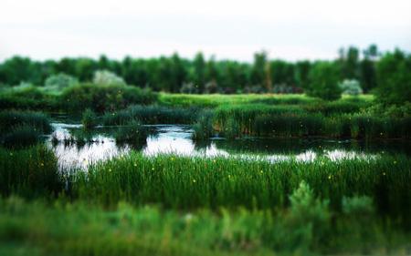 منظره سرسبز بسیار زیبا wonderfull green landscape
