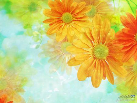 عکس زمینه با کیفیت گل های زرد yellow flower wallpaper