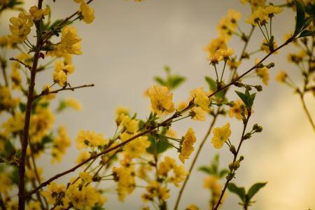 شکوفه گلهای زرد بهاری yellow spring flower