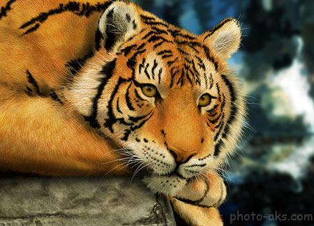 عکس زیبای ببر بزرگ yellow tiger 4k