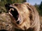 خرس عصبانی ترسناک