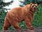 خرس کودیاک