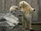 خرس قطبی در باغ وحش
