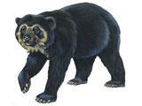 عکس نقاشی خرس عینکی