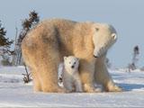 عکس محبت مادرانه حیوانات
